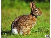 Мишень Кролик NICE Targets Rabbit