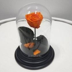 Роза в стеклянной колбе (оранжевая) SuperMini