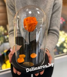 Роза в стеклянной колбе (оранжевая) Standart