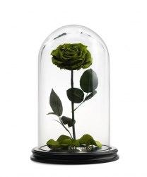 Роза в стеклянной колбе (зеленая)