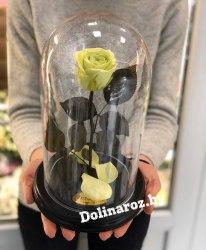 Роза в стеклянной колбе (фисташковая) Standart