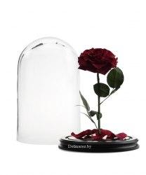 Роза в стеклянной колбе (бордовая)