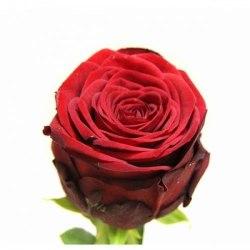 "Роза ""Red Naomi"""