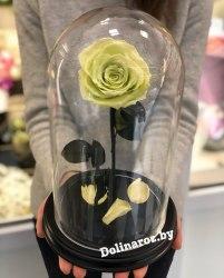 Роза в стеклянной колбе (фисташковая) Premium