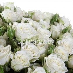 """Букет роз """"Искренность"""" 101 роза"""