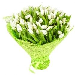 Белые Тюльпаны (101)