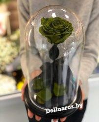 Роза в стеклянной колбе (зеленая) Premium