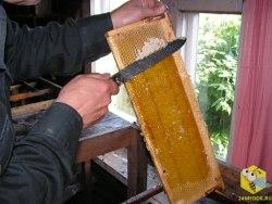 Нож пчеловодный (нержавейка) 200 мм