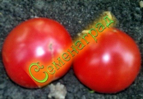 Семена томатов Малиновка - малиновый, среднерослый, среднеранний, до 250 г, транспортабельный. Семенаград - семена почтой