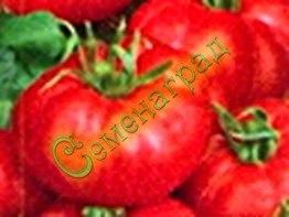 Семена томатов Микадо красный - среднерослый, до 300 г, ранний. Семенаград - семена почтой