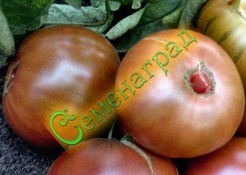 Семена томатов Микадо черный - среднерослый, до 300 г, кроваво-черный. Семенаград - семена почтой