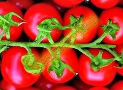 Семена томатов Пиколино плюс - 1 упак.-20 семян - разновидность Черри, высокорослый, среднеранний, 25 г, гроздевой, урожайный. Семенаград - семена почтой