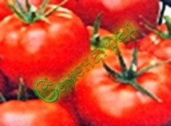 Семена томатов Подснежник - 1 уп.-20 семян - ранний, низкорослый, 200 г, урожайный. Семенаград - семена почтой