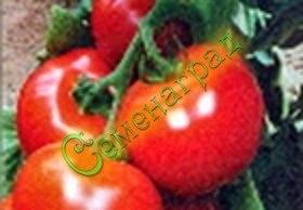 Семена томатов Полюс - до 100 г, урожайный, ранний, устойчивый, низкорослый. Семенаград - семена почтой