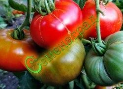 Семена томатов Раннее диво - 1 уп.-20 семян - низкорослый, ранний, до 200 г, очень урожайный. Семенаград - семена почтой