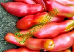 Семена томатов Розовый клык - 1 уп.-20 семян - перцевидный, ранний, до 200 г, низкорослый, гроздевой, розовый, очень малосемянный, шик. Семенаград - семена почтой