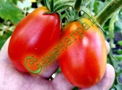 Семена томатов Ромэ - 1 уп.-20 семян - очень популярный, среднеранний, урожайный, до 120 г, овальный, среднерослый. Семенаград - семена почтой