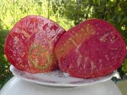 Семена томатов М-3 - высокорослый, среднего срока созревания, до 1 кг, розовый. Семенаград - семена почтой