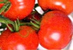 Семена томатов Кемеровский - ранний, до 150 г, низкорослый, урожайный. Семенаград - семена почтой