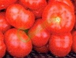 Семена томатов Спиридоновский - ранний, до 100 г, круглоплоский, низкорослый, урожайный. Семенаград - семена почтой