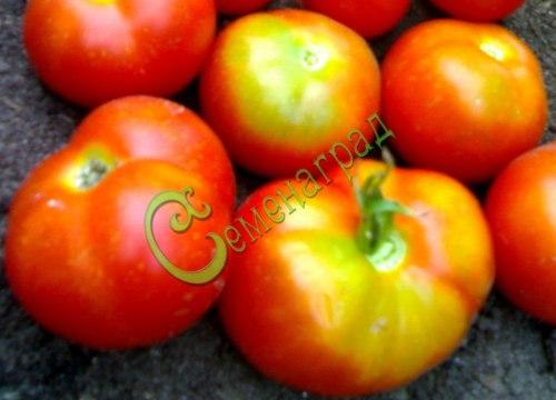 Семена томатов Бэтси - 20 семян - до 120 г, очень ранний, высотой до 1 м, картофельный лист