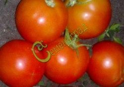 Семена томатов Гризанда - 1 уп.-20 семян - высокорослый, до 120 г, с длинными кистями, урожайный, не пожалеете. Семенаград - семена почтой