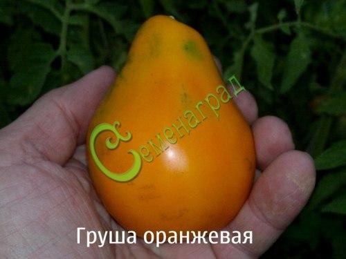 Семена томатов Груша оранжевая - 1 уп.-20 семян - высорослый, до 120 г, высокоурожайный, необыкновенный . Семенаград - семена почтой
