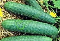 Семена огурцов Зозуля - 1 уп.-10 семян - известный тепличный сорт, плоды удлиненные, очень урожайный. Семенаград - семена почтой