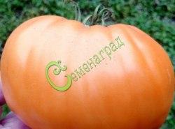 Семена почтой томат Оранжевые диетические - 20 семян - высокорослый, до 500 г, малосемянный