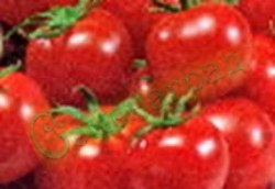 Семена томатов Балконное очарование - 1 уп.-20 семян - низкорослый, до 100 г, ранний. Семенаград - семена почтой
