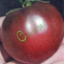 Семена томатов Поль Робсон - 20 семян - среднерослый, до 300 г, кроваво-черный