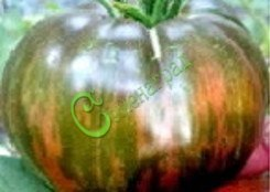 Семена томатов Стринги, выведен в США - высокорослый, с зелёными полосками на тёмно-вишнёвом фоне в полной спелости, сладкий, до 250 г. Семенаград - семена почтой