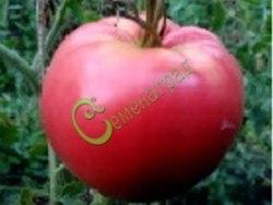 Семена томатов Уральский богатырь - высокорослый, сердцевидный, розовый, до 700 г. Семенаград - семена почтой