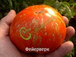 Семена томата Фейерверк - высокорослый, до 700 г, разноцветный, необыкновенный. Семенаград - семена почтой