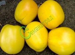 Семена томатов Фея - высокорослый, овальный, жёлтый, бочонковидный, 120-150 г, с пониженной кислотностью. Семенаград - семена почтой