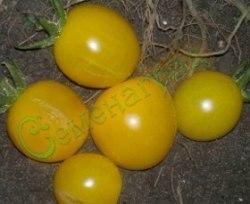 """Семена томатов Желтая вишня - 1 уп.-20 семян - высокорослый, среднеранний, круглый, аналогичен """" Космическому"""". Семенаград - семена почтой"""