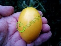 Семена томатов Чудо света - высокорослый, до 100 г, овальный, желтый, со сложными кистями, эффектный. Семенаград - семена почтой