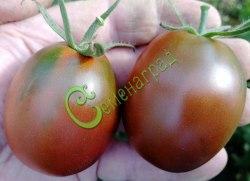 Семена томатов Щедрая сливянка - высокорослый, красно-коричневый, до 80 г, сладкий, урожайный, плотный, в солку. Семенаград - семена почтой