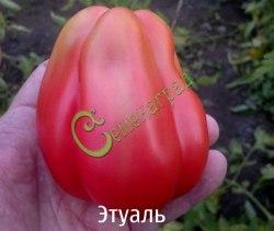 Семена томатов Этуаль - высокорослый, до 200 г, розовый, грушевидный, гофрированный, радует красотой и урожаем. Семенаград - семена почтой