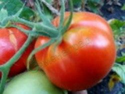 Семена томатов Китайский комнатный - 1 уп.-20 семян - высокорослый, до 150 г, урожайный. Семенаград - семена почтой