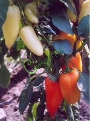 Семена сладкого перца Белозерка - конический, белый, розовеющий, крупный, ранний. Семенаград - семена почтой