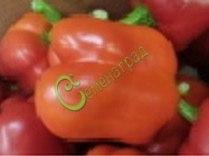 Семена сладкого перца Гигант Оранжевый - цилиндрический, крупный . Семенаград - семена почтой