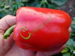 Семена сладкого перца Добрыня - цилиндрический, красный, крупный. Семенаград - семена почтой
