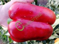 Семена сладкого перца Нижегородское чудо - цилиндрический, красный, крупный. Семенаград - семена почтой