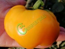 Семена сладкого перца Паприка желтый - круглоплоский, среднекрупный, ранний. Семенаград - семена почтой