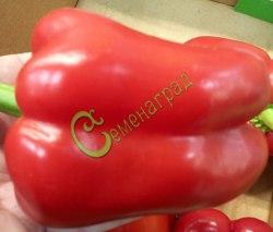 Семена сладкого перца Чудо-йоло - цилиндрический, красный, крупный. Семенаград - семена почтой