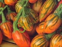 Семена баклажана Полосатый Тога - 10 семян, декоративные плоды длиной 6-7 см с зелеными полосками, кусты высотой до 150 см