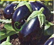 Семена баклажана Черный красавец - 10 семян - цилиндрический, тёмно-фиолетовый, крупный