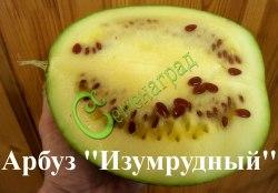 """Семена арбуза Арбуз """"Изумрудный"""", выведен во Франции - экзотический сорт, очень крупные плоды диаметром до 40 см со светло-зелёной плотной мякотью и красными семенами, сладкий и освежающий. Отлично подходит для засолки, приготовления джемов и варенья. Предпочтительно для выращивания в более тёплых регионах или в теплицах. Семенаград - семена почтой"""