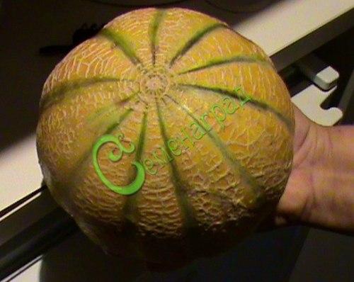 Семена дыни Дыня «Ада» (Израиль) - 1 уп.-4 семени - сегментированная сладкая канталупа с оранжевой мякотью. Семенаград - семена почтой